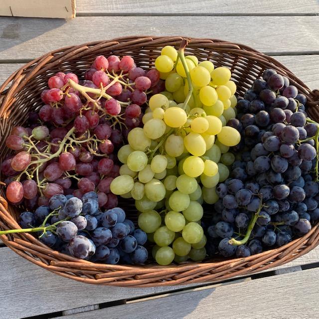 panier de raisins